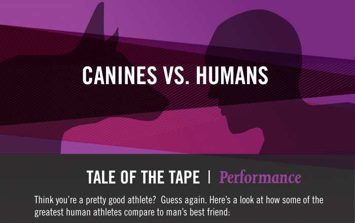 Canines vs. Humans - Tale Of The Tape I Performance via Purina Pro Plan Infographic
