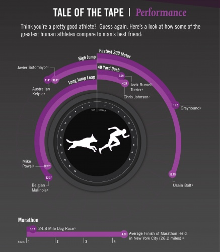 Dogs are naturally incredible athletes and Pro Plan wanted to showcase that by putting some amazing statistics side-by-side with some of the world's most accomplished athletes in an Infographic